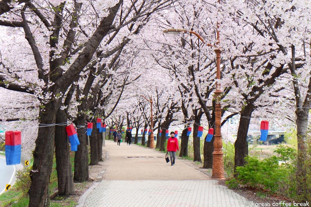 Printemps en Corée du Sud - Séoul