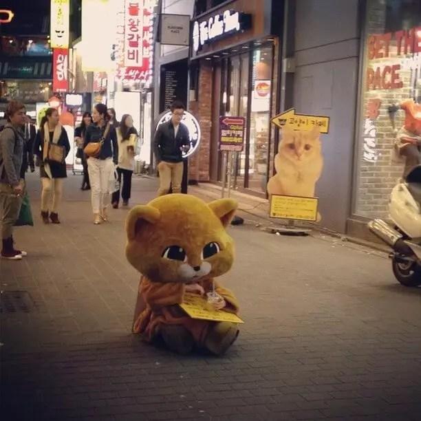 cat_dewk