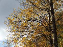 Осенние деревья * природа * цифровая фотография
