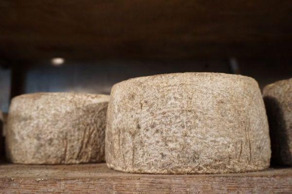 חדר הבשלה גבינות חוות קורנמל