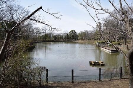 草加公園 大きな池