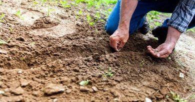 взносы в садовом товариществе