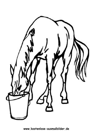 Ausmalbilder Pferd 15 Tiere Zum Ausmalen Malvorlagen