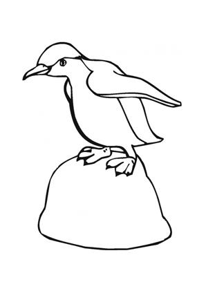 Ausmalbilder Kleiner Pinguin Auf Felsen Tiere Zum