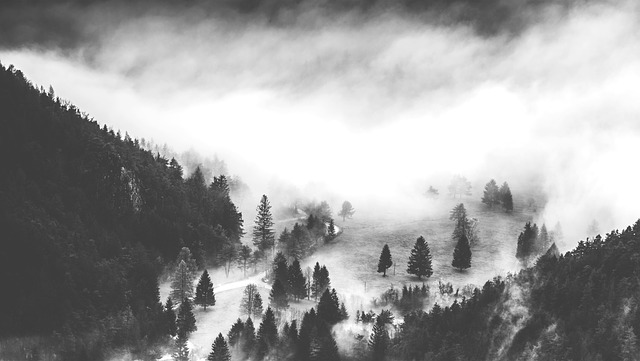 forest black and white photo