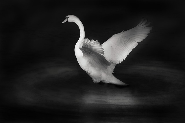 black and white bird photo