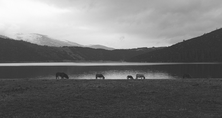 #Idea – Leading Horses to Water / 05.12.10