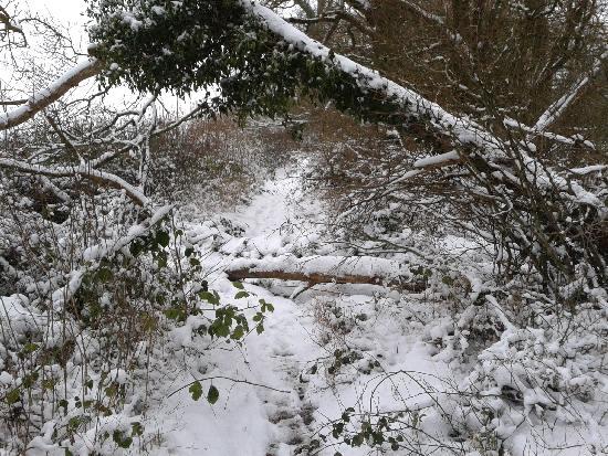 Toweridge Lane