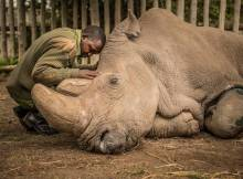 So Long Northern White Rhinos