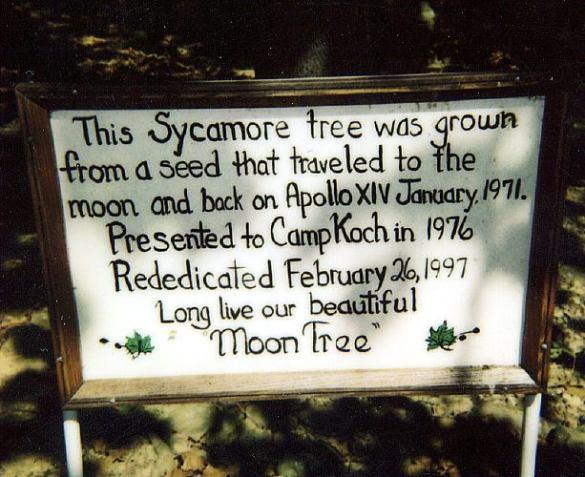 """Bu çınar ağacı, Ay'a gidip apollo 14 Ocak 1971'de geri dönen bir tohumdan yetiştirildi. 1976'da kamp koch'a teslim edildi.""""Uzun yaşa güzel ay ağacımız."""""""