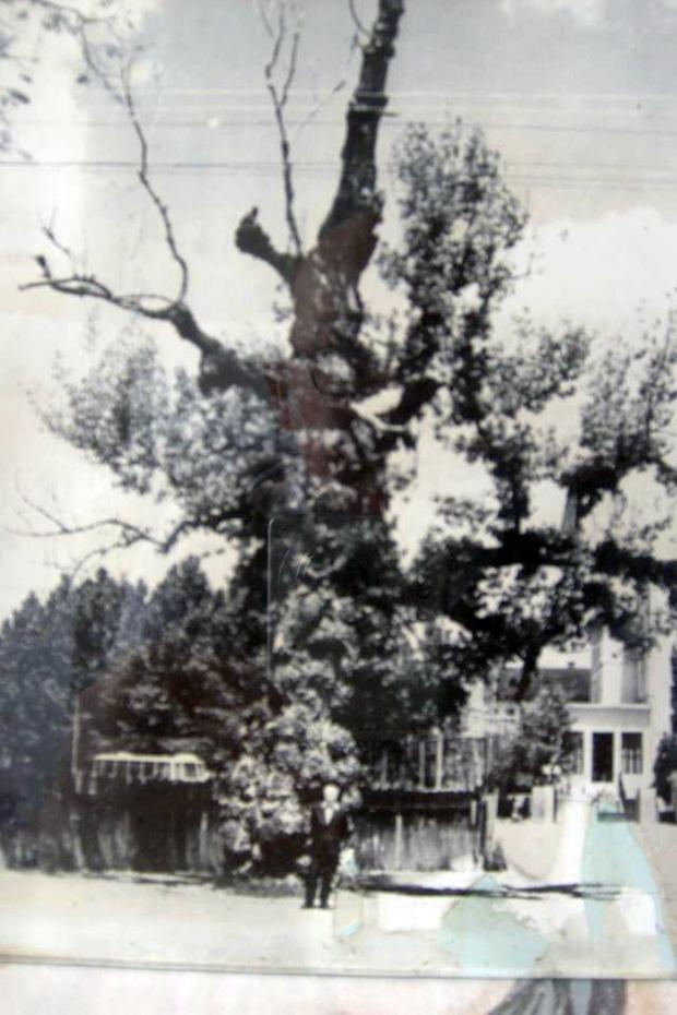 500 eves fa ami a liget bejárata elott volt -1968-as eveben.