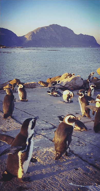 KRACHT_Hosen_Katanga_Pinguine