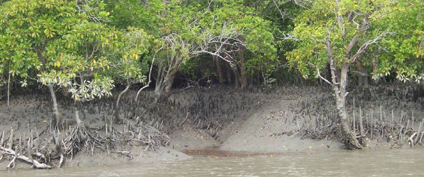 Sinking Sundarbans: Inexplicable lack of global concern