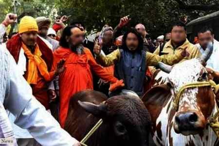 Noida cow vigilantes find a new role, go...