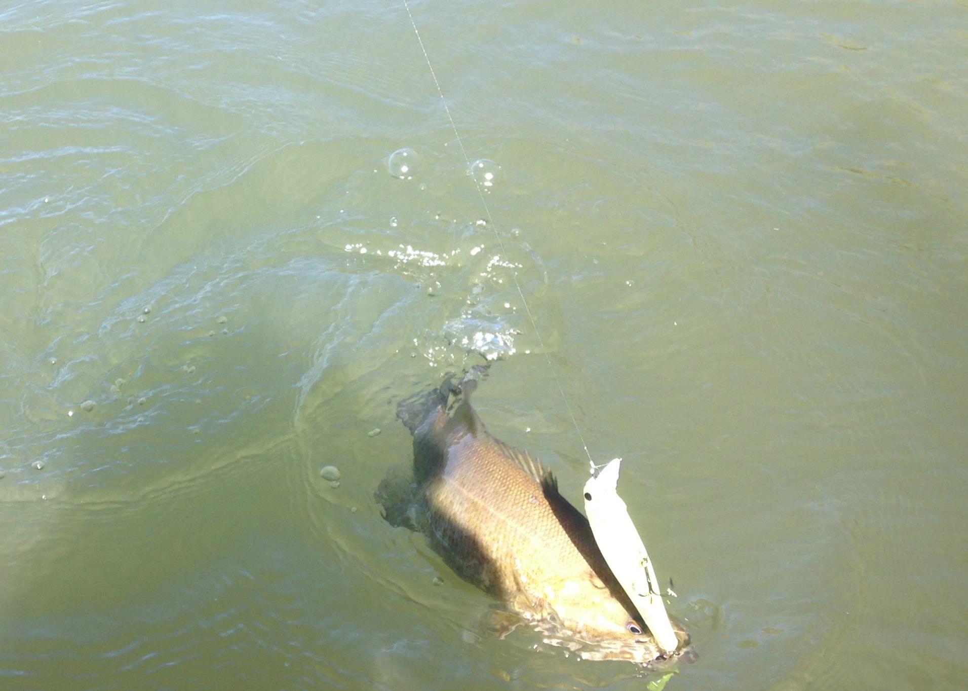 water clarity guide for choosing baits bass fishing