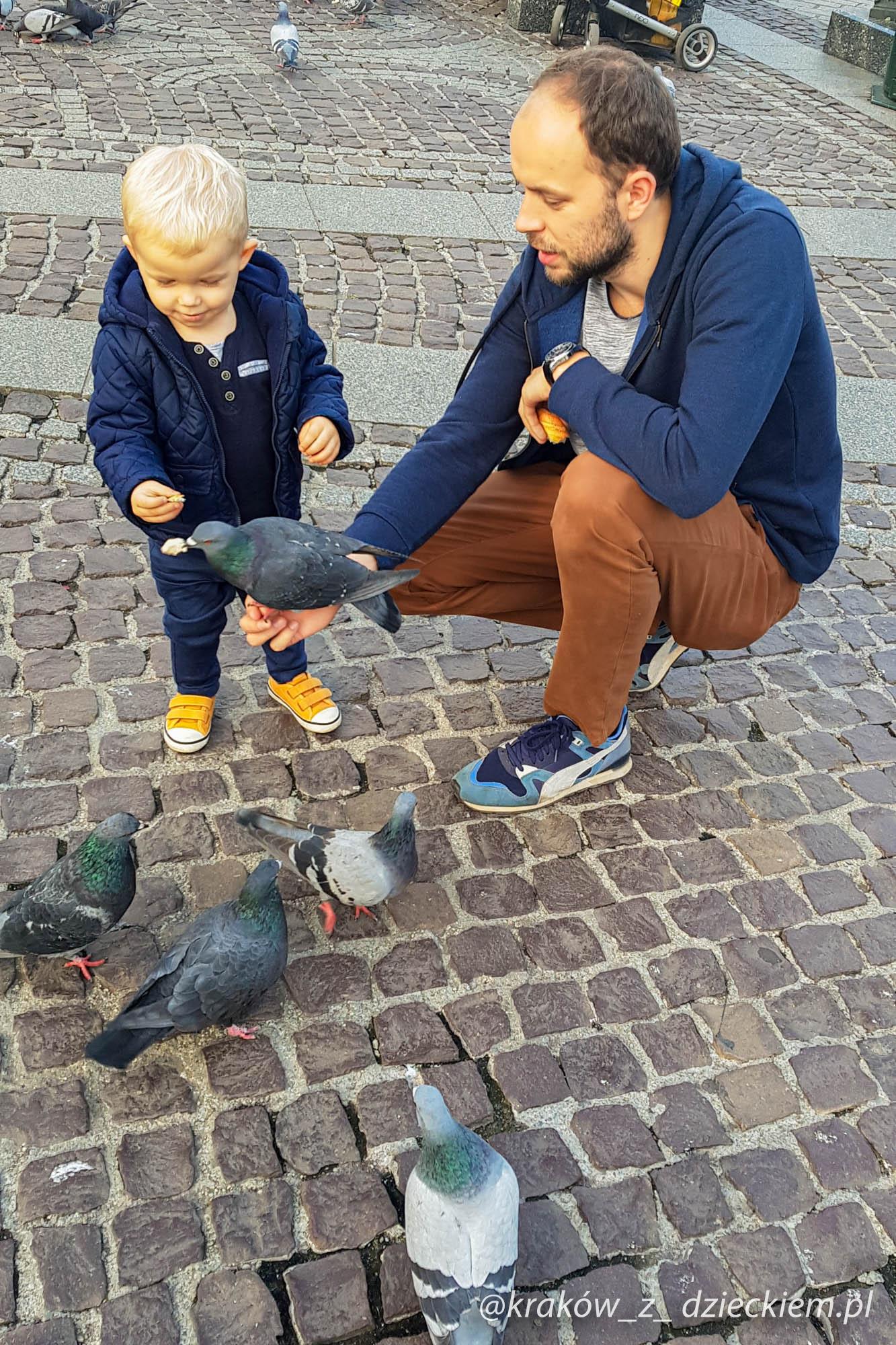 gołębie na rynku