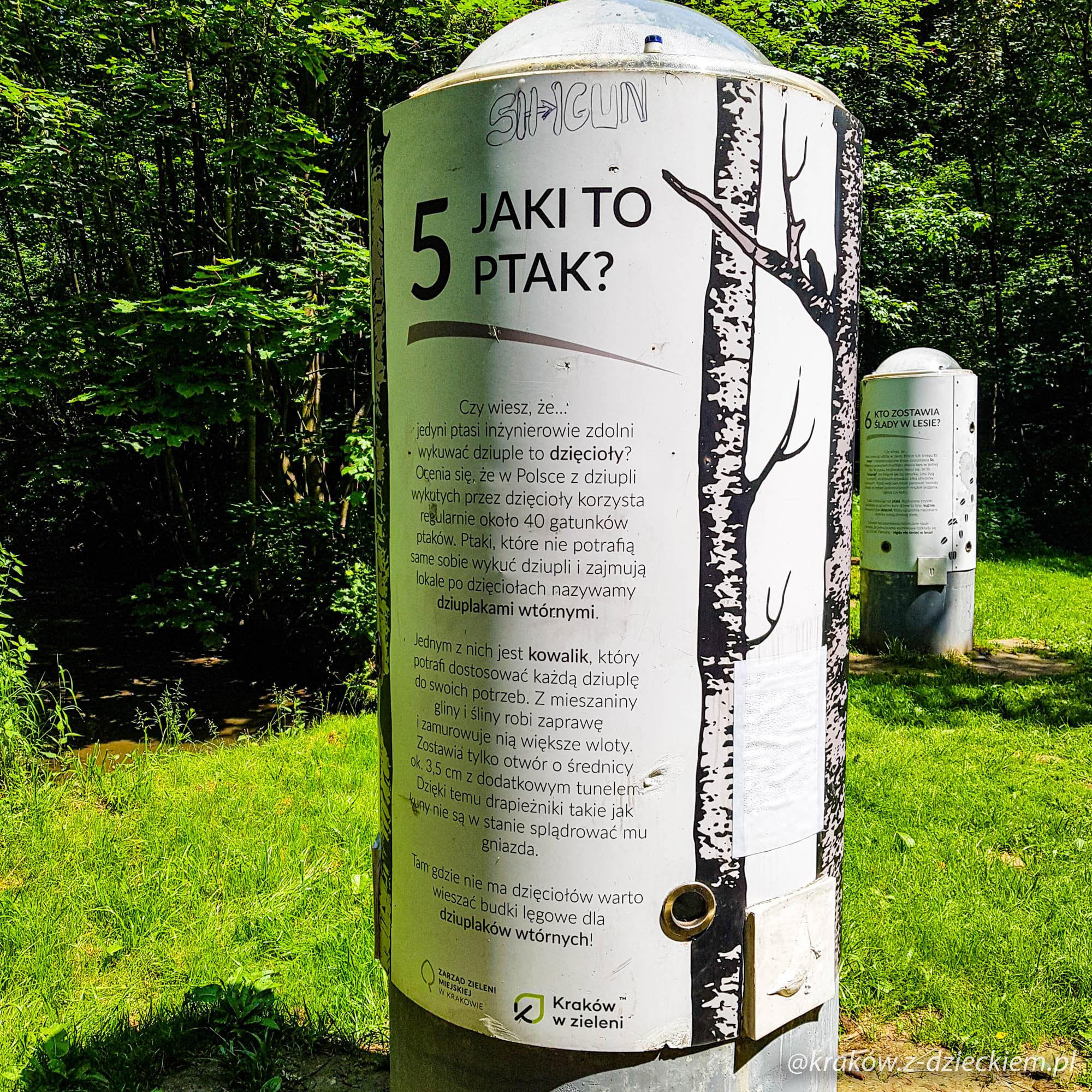 ścieżka przyrodnicza w lesie witkowickim