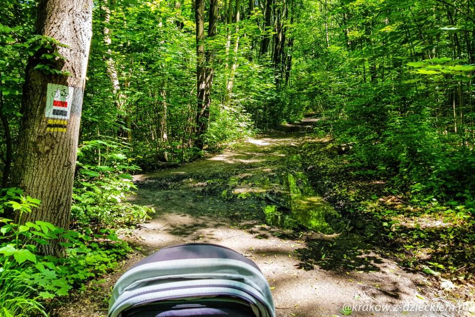 spacer wózkiem po lesie witkowickim