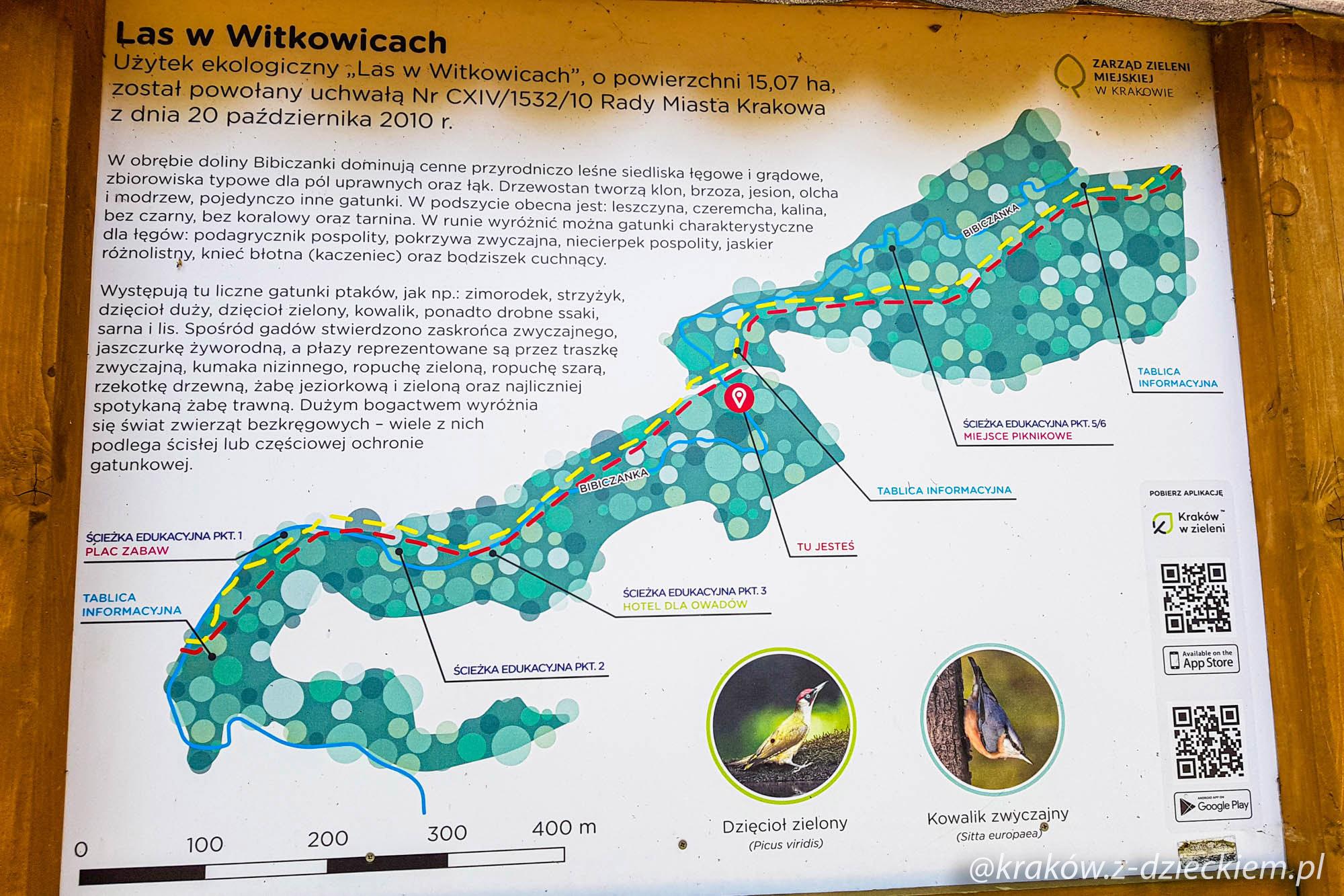 las witkowicki