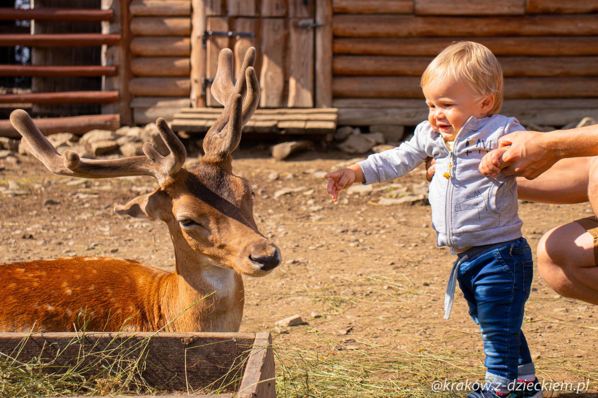 Beskidzki Raj, mini zoo