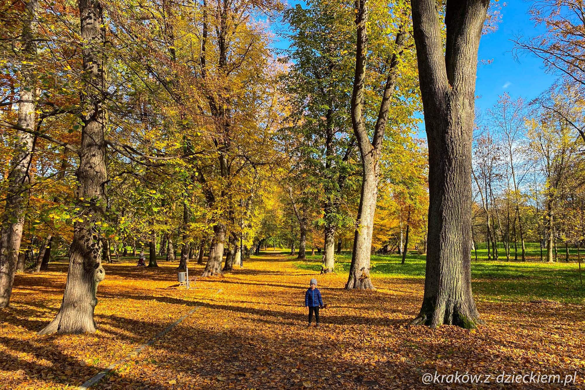 park i drzewa