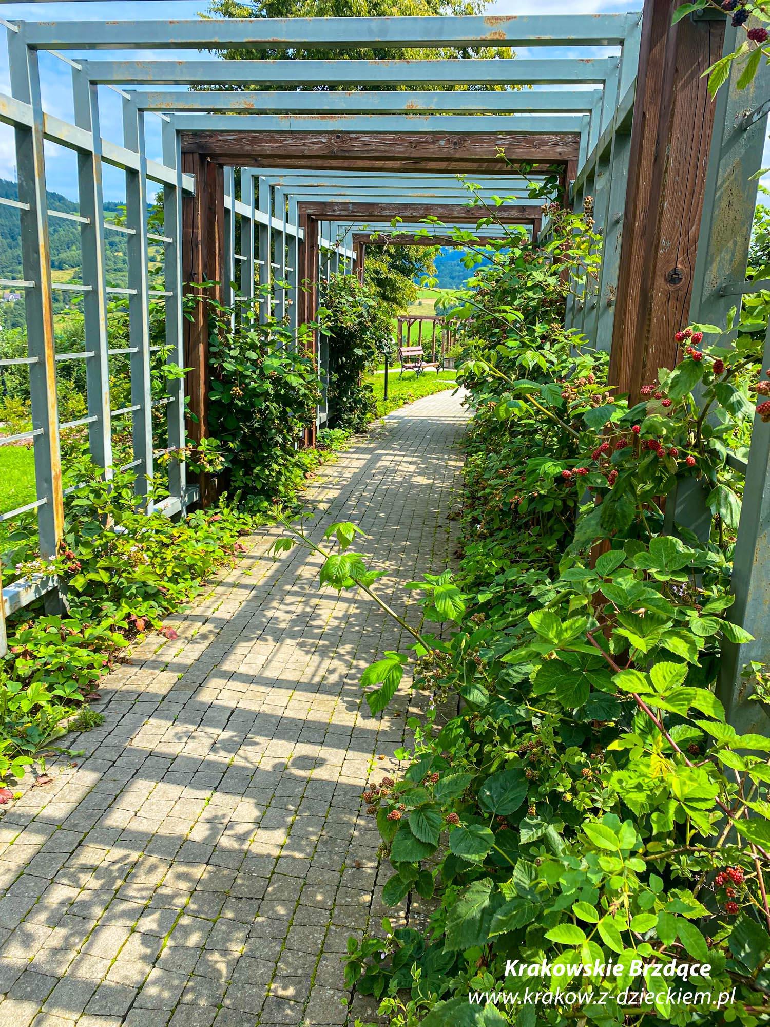 Ogród smakowy
