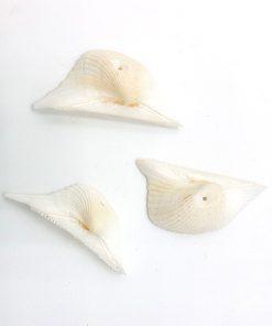 Schelp kralen ±30mm wit