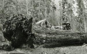 tree_21