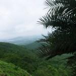Janapav Kuti View