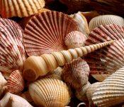 shell_0004