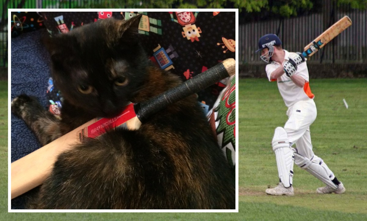 'I'm purr-fect': Pickle the cat takes on Mark in bid to lead The Road in 2014 (and yes, this is fur real)