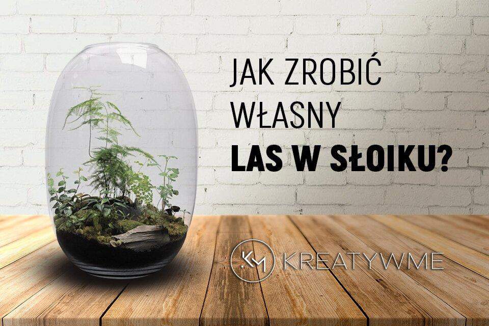 Ekosystem w słoiku - jak zrobić własny las w słoiku ?