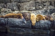 Argentina - Animals - Sea Lion