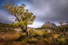 Australia - Tasmania - Cradle Mountain - Cradle Mountain