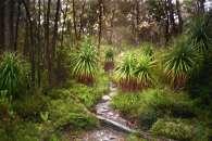 Australia - Tasmania - Cradle Mountain Lake St Clair NP - Track