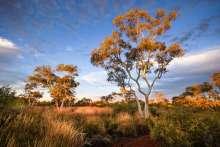 Australia - WA - Karijini 06