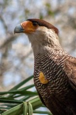 Brazil - Animal - Bird 07