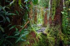 Hawaii - Oahu 009 Forest