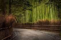 Japan - Kyoto - Kyoto - Bambushain