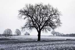 Trees - 0004 - Berlin