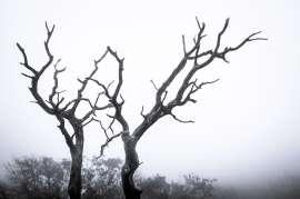 Trees - 0007- Hawaii