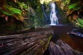 Waterfall - Tasmania - Hogarth Falls