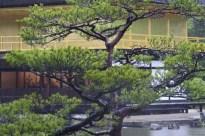 20100523_045818-IMG_2716_ji copy