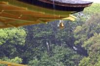 20100523_050454-IMG_2742_ji copy