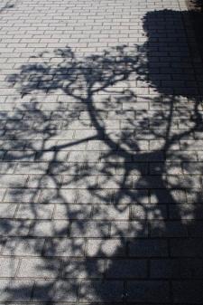 20100602_051649-IMG_6654_ji copy