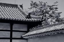 20110405_062717-IMG_3051_ji