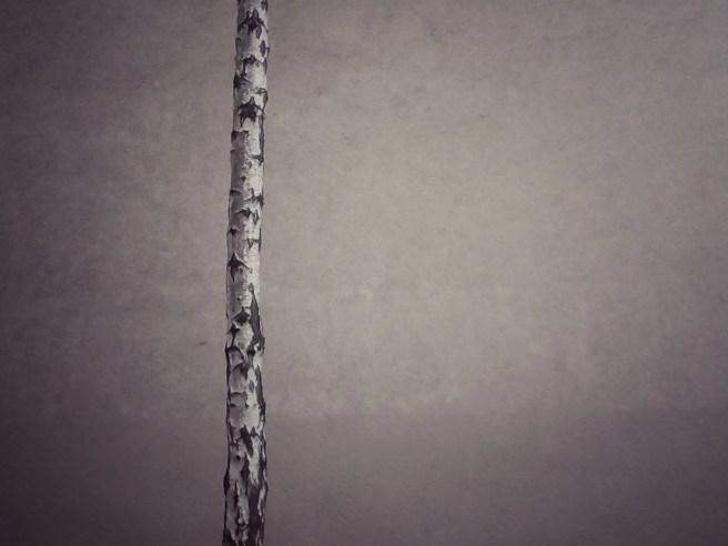 Trees - Die Birke