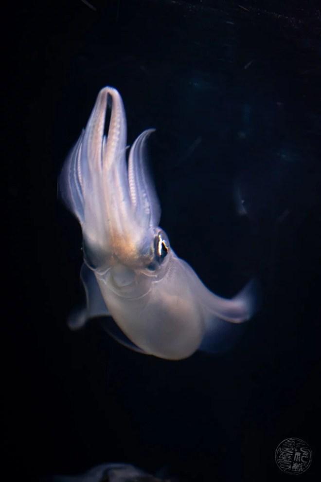 Japan (2019) - 045 Oita Umitamago Aquarium