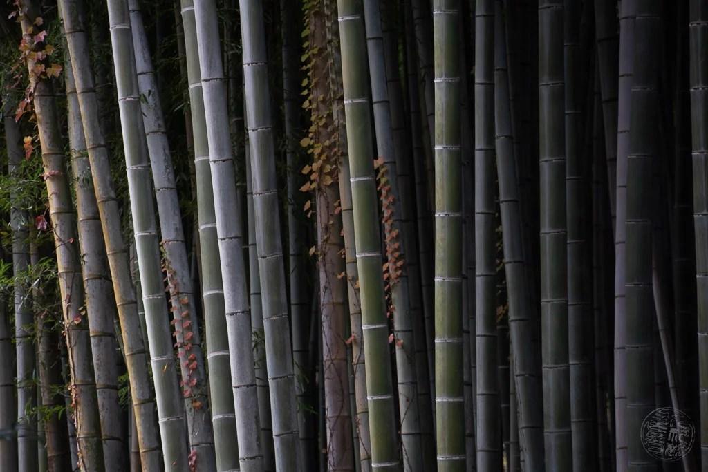 Japan - Kyoto - Adashino Nenbutsuji