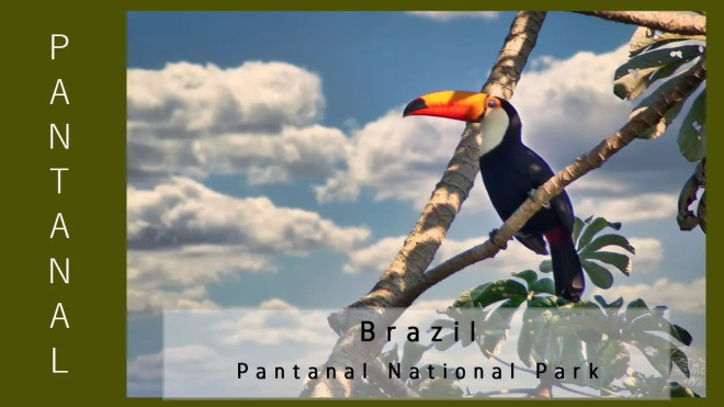Brazil - Pantanal - Animal Life